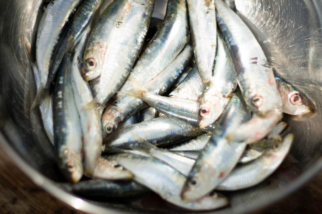 Portugiesische Sardinen